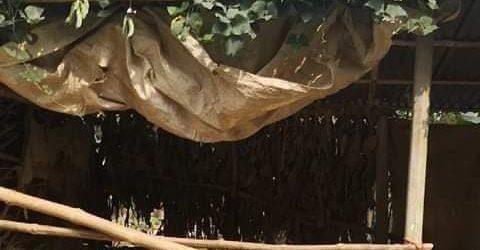 কাপাসিয়ার ভুবনের চালা গ্রামে গরু চুরির হিড়িক
