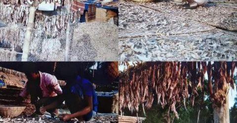 তালতলীতে শুটকি পল্লীর নানা সমস্যা জর্জরিত